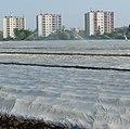 Bewässerung der Spargelfelder - panoramio (1).jpg