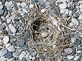 Bird nest beach Rhodos 02.JPG