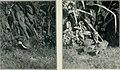 Bird notes (1923) (14752111011).jpg