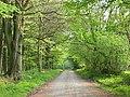 Blackmore Lane - geograph.org.uk - 420094.jpg