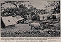 "Boer War; the ""Bourke"" Mercantile Boer ambulance camp. Repro Wellcome V0015534.jpg"