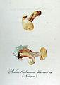 Boletus oudemansii — Flora Batava — Volume v12.jpg