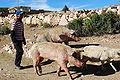 Boliviafarmer.jpg