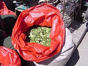 Bolivia coca leaves