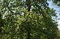 BotGardenFomin DSC 0300-1.jpg