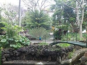 BotanicGardensinArucas