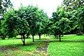Botanic garden limbe45.jpg