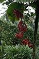 Botanical Garden Singapore 2017 (39250118181).jpg