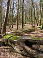 Boundary between Studley Wood and the Islands Thorns Inclosure, New Forest - geograph.org.uk - 148744.jpg