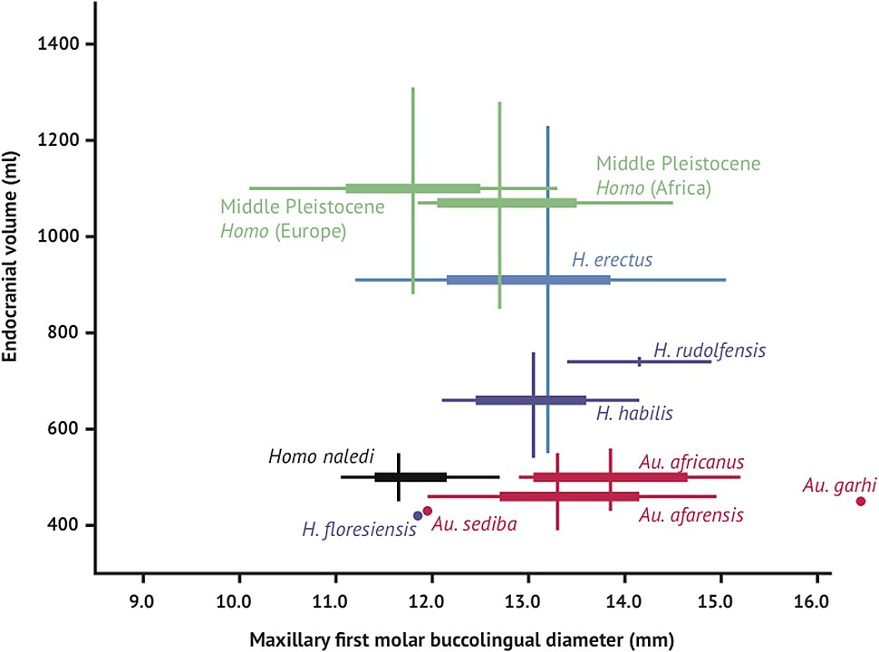 Brain size and tooth size in hominins