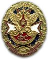 "Breast decoration ""Honoured worker of the GFS of the RF"".jpg"