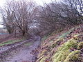 Bridleway by Allt-y-bela - geograph.org.uk - 345053.jpg