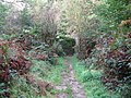 Bridleway through Long Wood - geograph.org.uk - 1532160.jpg