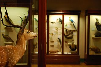 Bristol City Museum and Art Gallery - The museum's natural history galleries include a large selection of taxidermied animals