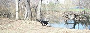 Bronxville dog playing near river
