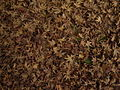 Brown leaves on the ground.jpg