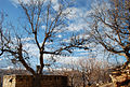 Bsharri - Walnut Trees (Winter).jpg