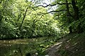 Buckland Monachorum, river Walkham 1 - geograph.org.uk - 805938.jpg