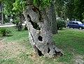 Budva - panoramio - vbif333.jpg