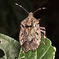 Bug with pretty patterns (25081217108).jpg