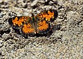 Butterfly - Ness Creek 2014 (14702339754).jpg