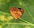 Butterfly 10 (30241198893).jpg