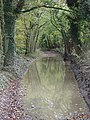Byway, West Woods - geograph.org.uk - 278340.jpg