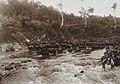 COLLECTIE TROPENMUSEUM Karbouwen in een rivier bij het Karbouwengat in de omgeving van Sarinembah Karolanden Sumatra`s Oostkust TMnr 60012226.jpg