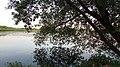 Calm water. June 2014. - Спокойная вода. Июнь 2014. - panoramio.jpg