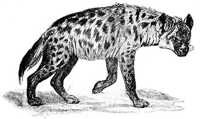 Cambridge Natural History Mammalia Fig 204.jpg