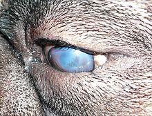 Perrita piel blanca se pone de perro para que la penetre - 4 6
