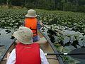 Canoe Tour, Belmont Bay (5998758803) (2).jpg