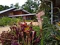 Carnivorous plants - NC Botanical Garden.jpg