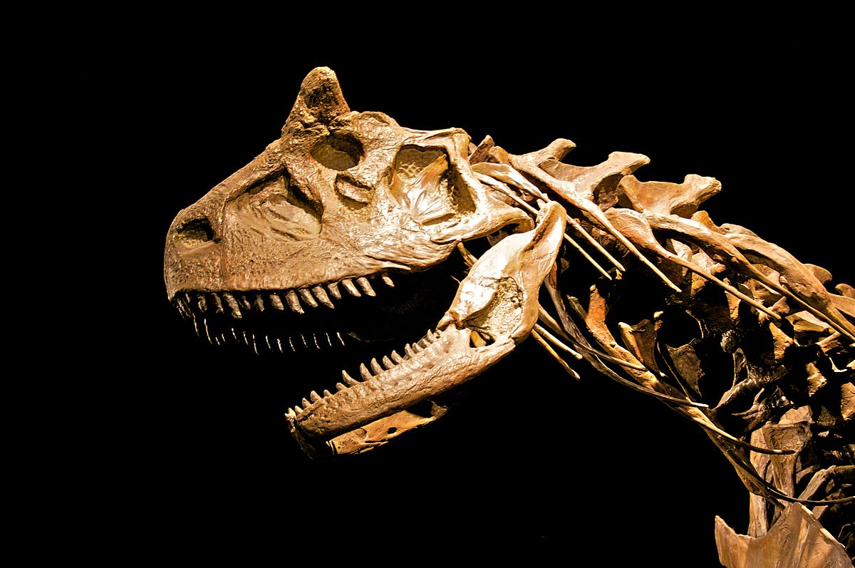 Carnotaurus LA.jpg