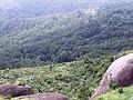 Carpete de árvores - panoramio.jpg