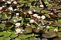 Castle Kennedy Gardens (7381579166).jpg