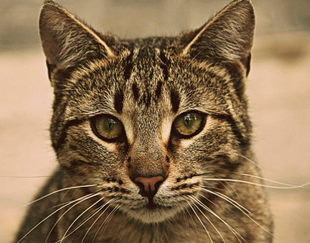 the cat of mega