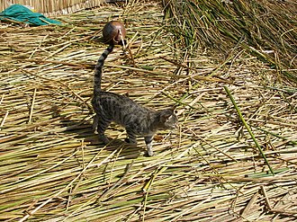 Uru people - Image: Cat on Uros Islands Peru