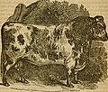 Cattle (1851) (19965666053).jpg