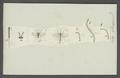 Cecidomyia - Print - Iconographia Zoologica - Special Collections University of Amsterdam - UBAINV0274 038 05 0002.tif