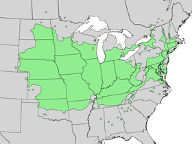 Celtis occidentalis range map 5.png