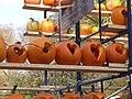 Central Park Pumpkins.JPG