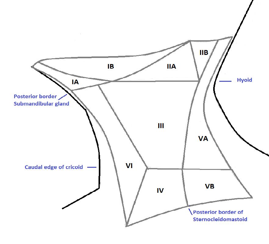 Cervical lymph node groups