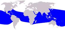 Binomo wiki