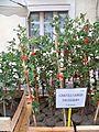 Chênes truffiers - plants chênes verts.jpg