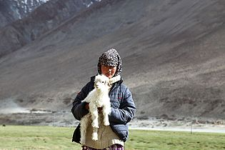 Changpa nomad girl.jpg