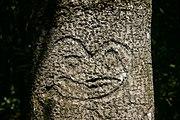 Chatham Island Tree Carving