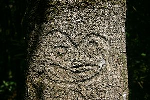 Moriori - Moriori tree carving or dendroglyph