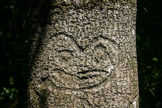 Chatham Islands - Moriori tree carving, or dendroglyph, found in the Chatham Islands