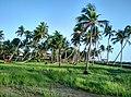 Chavakkad, Kerala, India - panoramio (29).jpg
